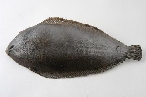 fi021 Dover Sole (Length 26cm)