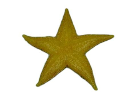fi038 Starfish Small Yellow (7.5cm) (end of line)