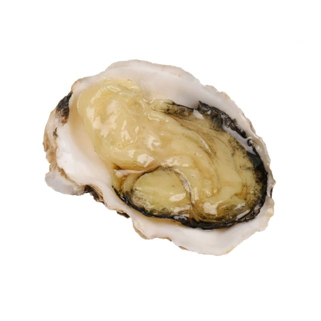 fi099 Oyster in 1/2 shell