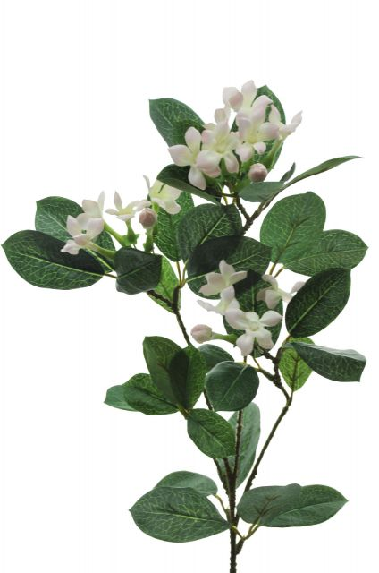 fl063 Stephanotis Twig