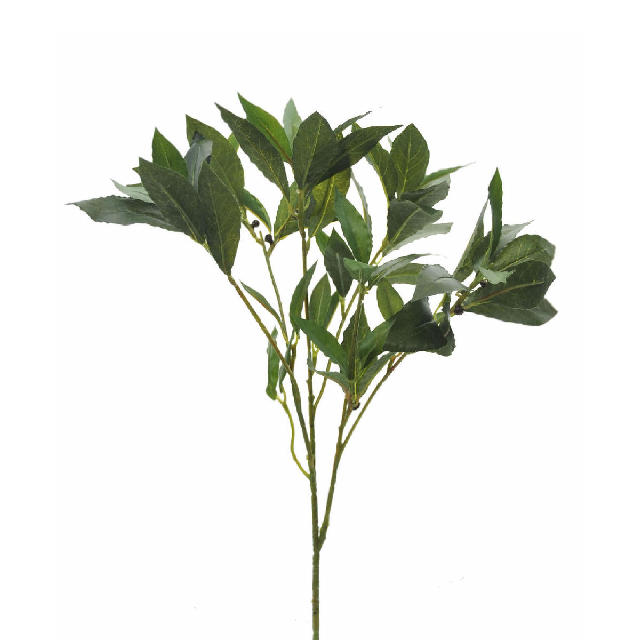 he002 Bay leaf spray
