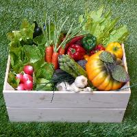 Box of Replica vegetables