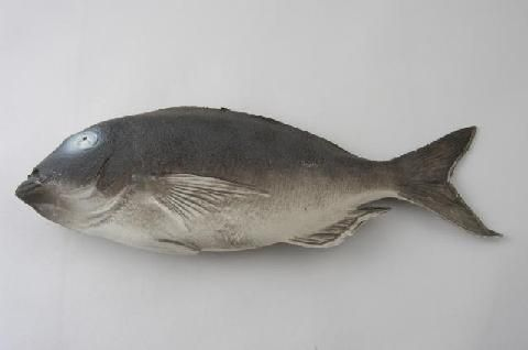 fi023 Bream (Length 38cm)
