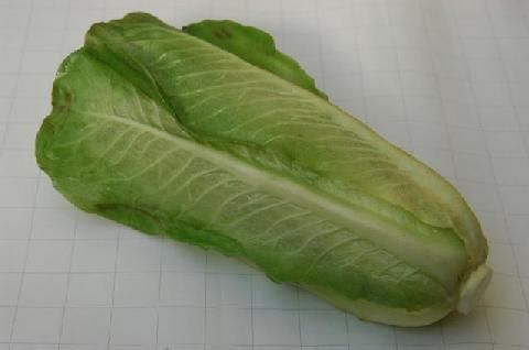 vw057 Lettuce romaine
